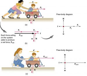 (a) A boy in a wagon is pushed by two girls toward the right. The force on the boy is represented by vector F one toward the right, and the force on the wagon is represented by vector F two in the same direction. Acceleration a is shown by a vector a toward the right and a friction force f is acting in the opposite direction, represented by a vector pointing toward the left. The weight W of the wagon is shown by a vector acting downward, and the normal force acting upward on the wagon is represented by a vector N. A free-body diagram is also shown, with F one and F two represented by arrows in the same direction toward the right and f represented by an arrow toward the left, so the resultant force F net is represented by an arrow toward the right. W is represented by an arrow downward and N is represented by an arrow upward; both the arrows have same length. (b) A boy in a wagon is pushed by a woman with a force F adult, represented by an arrow pointing toward the right. A vector a-prime, represented by an arrow, depicts acceleration toward the right. Friction force, represented by a vector f, acts toward the left. The weight of the wagon W is shown by a vector pointing downward, and the Normal force, represented by a vector N having same length as W, acts upward. A free-body diagram for this situation shows force F represented by an arrow pointing to the right having a large length; a friction force vector represented by an arrow f pointing left has a small length. The weight W is represented by an arrow pointing downward, and the normal force N, is represented by an arrow pointing upward, having the same length as W.