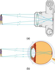 Figure (a) shows incident rays coming from an object (a girl) and falling on a convex lens in a camera. The rays after refraction produce an inverted, real, and diminished image on the film of the camera. Figure (b) shows the same object in front of a human eye. The rays from the object fall on the convex lens and on refraction produce a real, inverted, and diminished image on the retina of the eyeball.