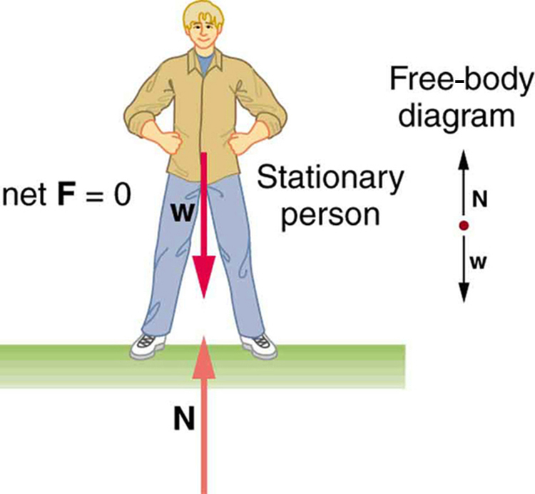 In the figure, a stationary man is standing on the ground. His feet are at a distance apart. His hands are at his waist. The left side is labeled as net F is equal to zero. At the right side a free body diagram is shown with one point and two arrows, one vertically upward labeled as N and another vertically downward labeled as W, from the point.