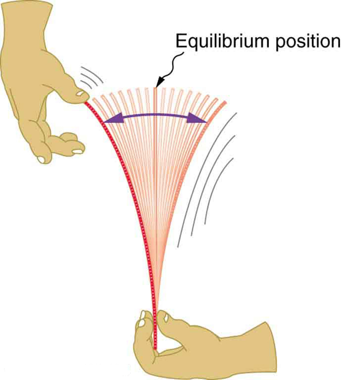 In this figure a hand holding a ruler tightly at the bottom is shown. The other hand pulls the top of the ruler and then releases it. Then the ruler starts vibrating, and oscillates around the equilibrium position. A vertical line is shown to mark the equilibrium position. A curved double-headed arrow shows the span of the oscillation.