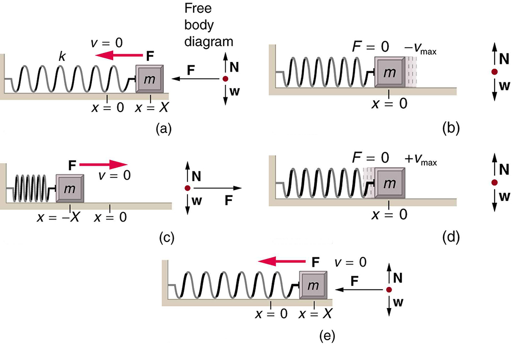 The figure a shows a spring on a frictionless surface attached to a bar or wall from the left side. On the right side of the spring, an object attached to it with mass m, its amplitude is given by X, and X is equal to zero at the equilibrium level. Force F is applied to it from the right side, shown with left direction pointed red arrow and velocity v is equal to zero. A direction point showing the north and west direction is also given alongside this figure as well as with other four figures. In figure b, after the force has been applied the object moves to the left compressing the spring a bit. And the displaced area of the object from its initial point is shown in sketched dots. The F here is equal to zero and the v is max in negative direction. In figure c, the spring has been compressed to the maximum level, and the amplitude is negative X. Now the direction of force changes to the rightward direction, shown with right direction pointed red arrow and the velocity v is zero. In figure d the spring is shown released from the compressed level and the object has moved toward the right side up to the equilibrium level. The F is zero, and the velocity v is maximum. In figure e the spring has been stretched loose to the maximum level and the object has moved to the far right. Now again the velocity here is equal to zero and the direction of force again is to the left hand side, shown here as F is equal to zero.