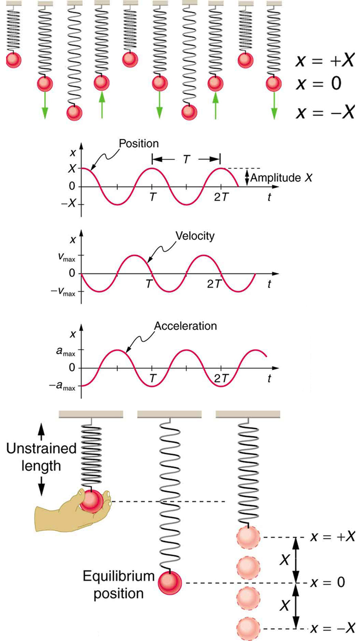 In the figure at the top there are ten springboards with objects of different mass values tied to them. This makes some springs highly compressed some as loosely stretched and some at equilibrium, which are shown as red spherical shaped. Alongside the figure there is a scale given for different amplitude values as x equal to positive X, zero and negative X. the upward and downward pointing arrows are shown with a few springboards. In the second figure there are three graphs. The first graph shows distance covered in form of a sine wave starting from a point x units on positive y-axis. The height of the wave above x-axis is marked as amplitude. The gap between two consecutive crests is marked as T. Below first graph there is another graph showing velocity in form of a sine wave starting from the origin downward. In the third graph below the second one, acceleration is shown in the form of sine wave starting from x units on the negative y-axis upward. In the last figure three position of a spring are shown. The first position shows the unstretched length of a spring pendulum. A hand is holding the bob of the pendulum. In the second position the equilibrium position of the spring and bob is shown. This position is lower the first one. In the third case the up and down oscillations of the spring pendulum are shown. The bob is moving x units in upward and downward directions alternatively.