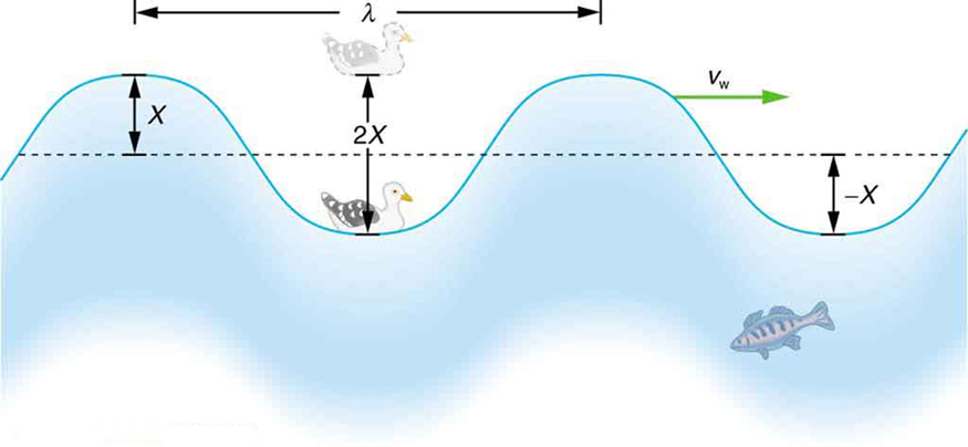 The figure shows an idealized ocean wave with two crests and two troughs that passes under a sea gull that bobs up and down in simple harmonic motion. The wave has a wavelength lambda which is the distance between adjacent identical parts of the wave. The height of a crest is equal to the depth of the trough that is X, therefore the total vertical distance between the top of a crest and the bottom of the trough is two-X.