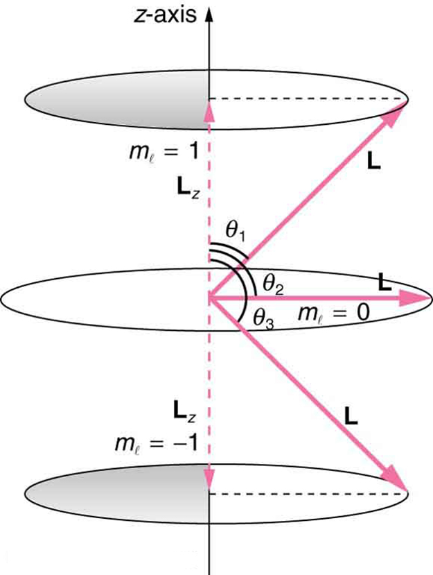 The image shows two possible values of component of a given angular momentum along z-axis. One circular orbit above the original circular orbit is shown for m sub l value of plus one. Another circular orbit below the original circular orbit is shown for m sub l value of minus one. The angular momentum vector for the top circular orbit makes an angle of theta sub one with the vertical axis. The horizontal angular momentum vector at original circular orbit makes an angle of theta sub two with the vertical axis. The angular momentum vector for the bottom circular orbit makes an angle of theta sub three with the vertical axis.