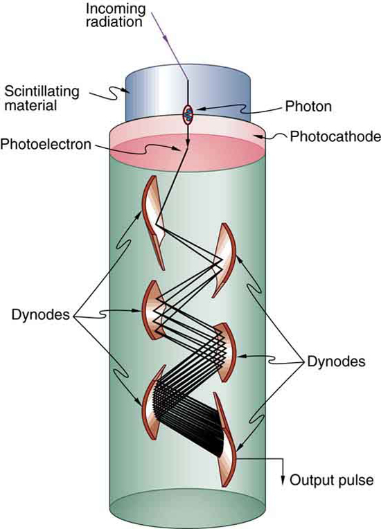 A cylindrical tube contains several curved plates labeled dynodes. Incoming radiation passes through a scintillating material at the top of the cylindrical tube. The photon thus produced generates a photoelectron at the photocathode and the photoelectron is then multiplied by collisions at the several successive dynodes, creating a sizable output electric pulse.