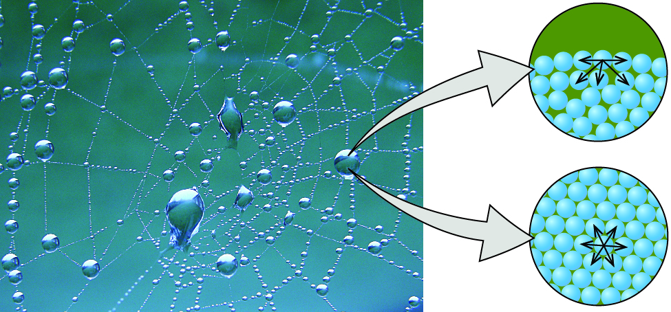 A photo of a spider's web with droplets of water attached to it is shown. Two images are shown the right of the photo and arrows lead from the photo to the images. The upper image shows twenty eight blue spheres stacked one atop the other in the bottom of a circular background. Five arrows are drawn pointing to the sides and downward from the sphere in the top middle of the drawing. The lower image shows another circular background of the same size as the first, but this time the blue spheres fill the image and are packed closely together. A sphere in the middle has six arrows pointing in all directions away from it.