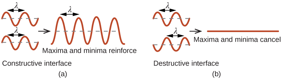 """A pair of images is shown that has four sections. In the first section, two sinusoidal waves are shown, one drawn above the other, and a section from the top of one curve to the top of the next curve is labeled """"lambda."""" The curves align with one another. The phrase below this reads """"Constructive interference."""" A right facing arrow leads from the first section to the second, which shows one larger sinusoidal curve that has higher and lower peaks and troughs. A section from the top of one curve to the top of the next curve is labeled """"lambda"""" and the phrase below this reads """"Maxima and minima reinforce."""" In the second section, two sinusoidal waves are shown, one drawn above the other, and a section from the top of one curve to the top of the next curve is labeled """"lambda."""" The curves do not align with one another. The phrase below this reads """"Destructive interference."""" A right facing arrow leads from the first section to the second, which shows one flat line. The phrase below this reads """"Maxima and minima cancel."""""""