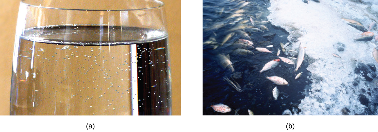 Two photos are shown. The first shows the top portion of a transparent colorless glass of a clear colorless liquid with small bubbles near the interface of the liquid with the container. The second photo shows a portion of a partially frozen body of water with dead fish appearing on in the water and on an icy surface.
