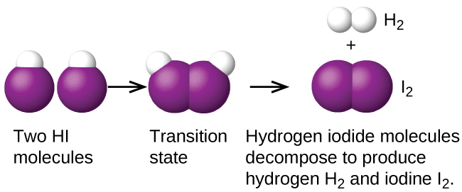 "This figure provides an illustration of a reaction between two H I molecules using space filling models. H atoms are shown as white spheres, and I atoms are shown as purple spheres. On the left, two H I molecules are shownwith a small white sphere bonded to a much larger purple sphere. The label, ""Two H I molecules,"" appears below. An arrow points right to a similar structure in which the two molecules appear pushed together, so that the purple spheres of the two molecules are touching. Below appears the label, ""Transition state."" Following another arrow, two white spheres are shown vertically oriented and bonded together with the label, ""H subscript 2"" above. The H subscript 2 molecule is followed by a plus sign and two purple spheres bonded together with the label, ""I subscript 2"" above. Below these structures is the label, ""Hydrogen iodide molecules decompose to produce hydrogen H subscript 2 and iodine I subscript 2."""