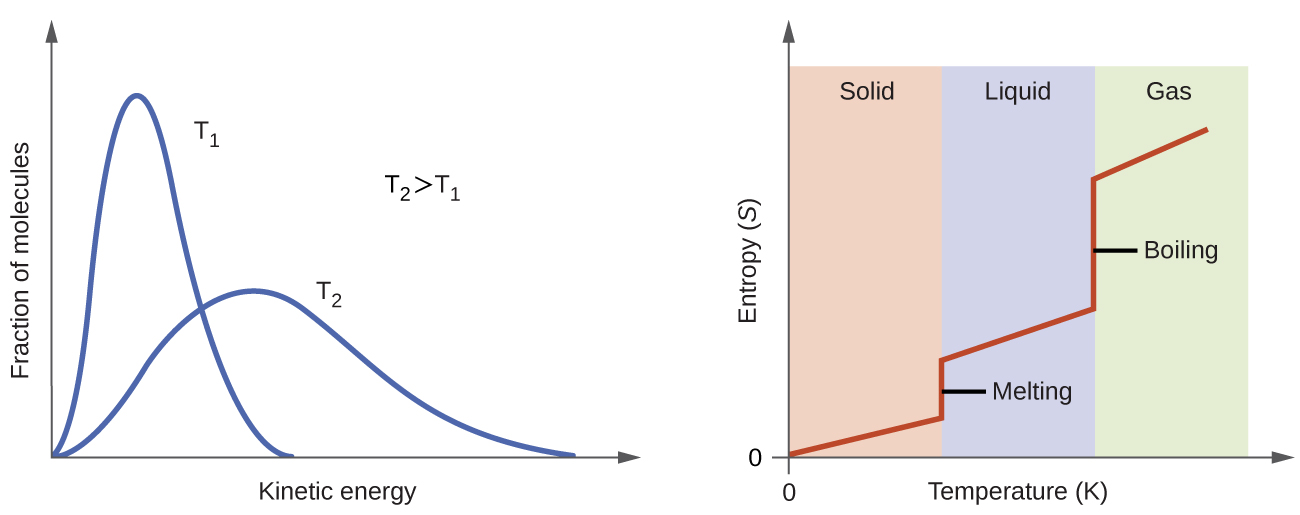 "Two graphs are shown. The y-axis of the left graph is labeled, ""Fraction of molecules,"" while the x-axis is labeled, ""Velocity, v ( m / s ),"" and has values of 0 through 1,500 along the axis with increments of 500. Four lines are plotted on this graph. The first, labeled, ""100 K,"" peaks around 200 m / s while the second, labeled, ""200 K,"" peaks near 300 m / s and is slightly lower on the y-axis than the first. The third line, labeled, ""500 K,"" peaks around 550 m / s and is lower than the first two on the y-axis. The fourth line, labeled, ""1000 K,"" peaks around 750 m / s and is the lowest of the four on the y-axis. Each line get increasingly broad. The second graph has a y-axis labeled, ""Entropy, S,"" with an upward-facing arrow and an x-axis labeled, ""Temperature ( K ),"" and a right-facing arrow. The graph has three equally spaced columns in the background, labeled, ""Solid,"" ""Liquid,"" and, ""Gas,"" from left to right. A line extends slightly upward through the first column in a slight upward direction, then goes straight up in the transition between the first two columns. In then progresses in a slight upward direction through the second column, then goes up dramatically between the second and third columns, then continues in a slight upward direction once more. The first vertical region of this line is labeled, ""Melting,"" and the second is labeled, ""Boiling."""