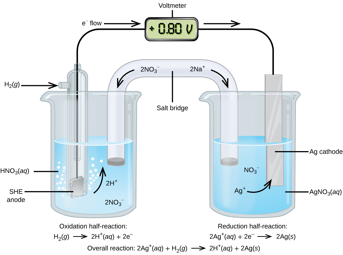 "This figure contains a diagram of an electrochemical cell. Two beakers are shown. Each is just over half full. The beaker on the left contains a clear, colorless solution which is labeled ""H N O subscript 3 ( a q )."" The beaker on the right contains a clear, colorless solution which is labeled ""A g N O subscript 3 ( a q )."" A glass tube in the shape of an inverted U connects the two beakers at the center of the diagram and is labeled ""Salt bridge."" The tube contents are colorless. The ends of the tubes are beneath the surface of the solutions in the beakers and a small grey plug is present at each end of the tube. The label ""2 N a superscript plus"" appears on the upper right portion of the tube. A curved arrow extends from this label down and to the right. The label ""2 N O subscript 3 superscript negative"" appears on the upper left portion of the tube. A curved arrow extends from this label down and to the left. The beaker on the left has a glass tube partially submerged in the liquid. Bubbles are rising from the grey square, labeled ""SHE anode"" at the bottom of the tube. A curved arrow points up to the right. The labels ""2 H superscript plus"" and ""2 N O subscript 3 superscript negative"" appear on the liquid in the beaker. A black wire extends from the grey square up the interior of the tube through a small port at the top to a rectangle with a digital readout of ""positive 0.80 V"" which is labeled ""Voltmeter."" A second small port extends out the top of the tube to the left. An arrow points to the port opening from the left. The base of this arrow is labeled ""H subscript 2 ( g )."" The beaker on the right has a silver strip that is labeled ""A g cathode."" A wire extends from the top of this strip to the voltmeter. An arrow points toward the voltmeter from the left which is labeled ""e superscript negative flow."" Similarly, an arrow points away from the voltmeter to the right. The solution in the beaker on the right has the labels ""N O subscript 3 superscript negative"" and ""A g superscript plus"" on the solution. A curved arrow extends from the A g superscript plus label to the A g cathode. Below the left beaker at the bottom of the diagram is the label ""Oxidation half-reaction: H subscript 2 ( g ) right pointing arrow 2 H superscript plus ( a q ) plus 2 e superscript negative."" Below the right beaker at the bottom of the diagram is the label ""Reduction half-reaction: 2 A g superscript plus ( a q ) right pointing arrow 2 A g ( s )."""