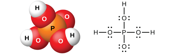 "A space filling model shows an orange atom labeled, ""P,"" bonded on four sides to red atoms labeled, ""O."" Three of the red atoms are bonded to white atoms labeled, ""H."" A Lewis structure is also shown in which a phosphorus atom is single bonded to four oxygen atoms, three of which have two lone pairs of electrons, and one of which has three lone pairs of electrons. The oxygen atoms with two lone pairs of electrons are single bonded to hydrogen atoms."