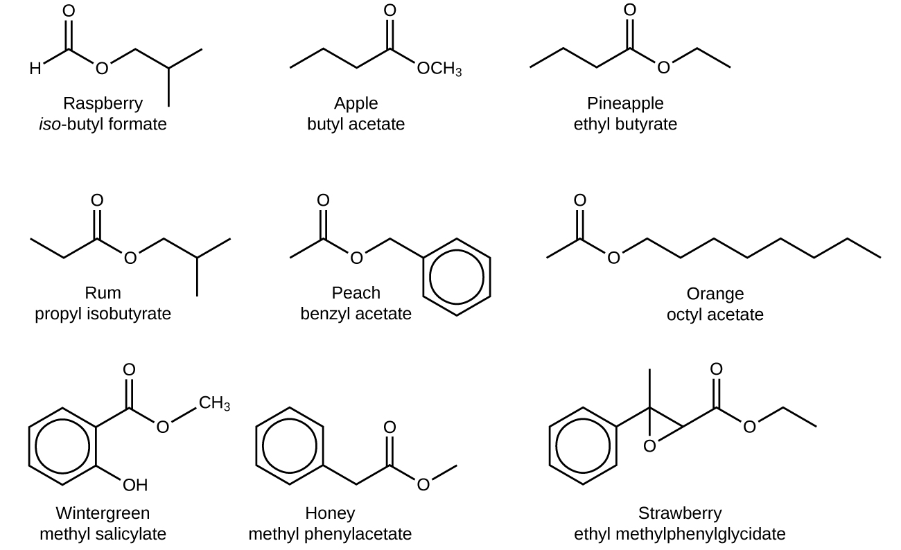 """There are nine structures represented in this figure. The first is labeled, """"raspberry,"""" and, """"iso-butyl formate."""" It shows an H atom with a line going up and to the right which then goes down and to the right. It goes up and to the right again and down and to the right and up and to the right. At the first peak is a double bond to an O atom. At the first trough is an O atom. At the second trough, there is a line going straight down. The second is labeled, """"apple,"""" and, """"butyl acetate."""" There is a line that goes up and to the right, down and to the right, up and to the right, and down and to the right. At the second peak is a double bond to an O atom. At the end, on the right is O C H subscript 3. The third is labeled, """"pineapple,"""" and, """"ethyl butyrate."""" It is a line that goes up and to the right, down and to the right, up and to the right, down and to the right, up and to the right, and down and to the right. At the second peak is a double bond to an O atom and at the second trough is an O atom. The fourth is labeled, """"rum,"""" and """"propyl isobutyrate."""" It shows a line that goes down and to the right, up and to the right, down and to the right, up and to the right, down and to the right and up and to the right. The first complete peak has a double bond to an O atom and the second trough has an O atom. The fifth is labeled, """"peach,"""" and """"benzyl acetate."""" It shows a line that goes up and to the right, down and to the right, up and to the right and down and to the right. This line connects to a hexagon with a circle inside it. The first peak has a double bond to an O atom and the first trough has an O atom. The sixth is labeled, """"orange,"""" and, """"octyl acetate."""" It shows a line that goes up and to the right and down and to the right and up and to the right and down and to the right and up and to the right and down and to the right and up and to the right and down and to the right and up and to the right and down and to the right. The first peak has a double bond to an O at"""