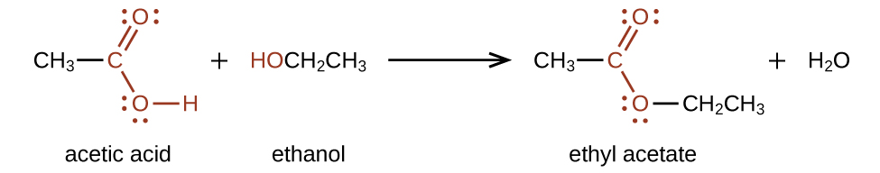A chemical reaction is shown. On the left, a C H subscript 3 group bonded to a red C atom. The C atom forms a double bond with an O atom which is also in red. The C atom is also bonded to an O atom which is bonded to an H atom, also in red. A plus sign is shown, which is followed by H O C H subscript 2 C H subscript 3. The H O group is in red. Following a reaction arrow, a C H subscript 3 group is shown which is bonded to a red C atom with a double bonded O atom and a single bonded O. To the right of this single bonded O atom, a C H subscript 2 C H subscript 3 group is attached and shown in black. This structure is followed by a plus sign and H subscript 2 O. The O atoms in the first structure on the left and the structure following the reaction arrow have two pairs of electron dots.