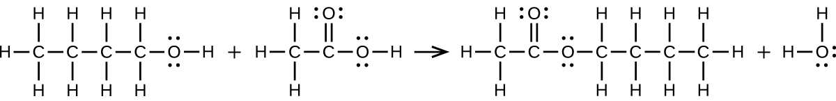 A reaction is shown. The first molecular structure shows a C atom bonded to three H atoms and another C atom. This second C atom is bonded to two H atoms and a third C atom. This third C atom is bonded to two H atoms and a fourth C atom. This C atom is bonded to two H atoms and an O atom. The O atom is bonded to an H atom. The O atom has two pairs of electrons dots. There is a plus sign. The next molecular structure shows a C atom bonded to three H atoms and another C atom. This C atom forms a double bond with an O atom and a single bond with another O atom. The O atom forms a bond with an H atom. Both O atoms have two pairs of electron dots. There is a reaction arrow that points right. The next molecular structure shows a C atom bonded to three H atoms and another C atom. This second C atom forms a double bond with an O atom and a single bond with another O atom. This second O atom is bonded to a C atom which is bonded to two H atoms and another C atom. This C atom is bonded to two H atoms and another C. This C atom is bonded to two H atoms and another C atom. The C atom is bonded to three H atoms. The O atoms have two pairs of electron dots. There is a plus sign. The final molecular structure shows an O atom bonded to two H atoms. The O atom has two pairs of electron dots.