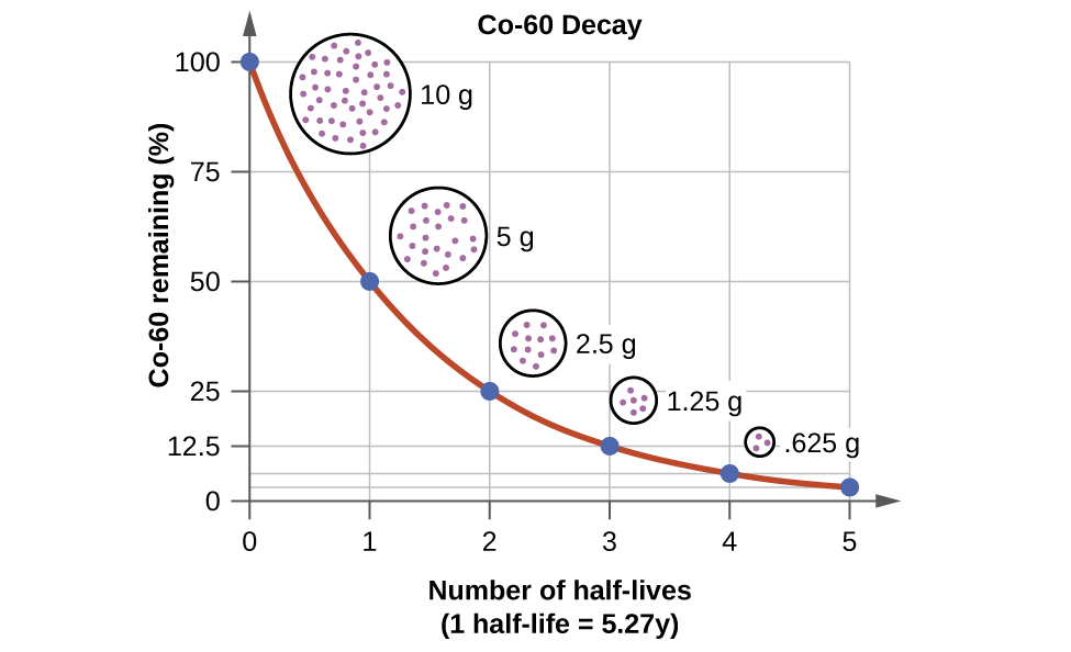 "A graph, titled ""C o dash 60 Decay,"" is shown where the x-axis is labeled ""C o dash 60 remaining, open parenthesis, percent sign, close parenthesis"" and has values of 0 to 100 in increments of 25. The y-axis is labeled ""Number of half dash lives"" and has values of 0 to 5 in increments of 1. The first point, at ""0, 100"" has a circle filled with tiny dots drawn near it labeled ""10 g."" The second point, at ""1, 50"" has a smaller circle filled with tiny dots drawn near it labeled ""5 g."" The third point, at ""2, 25"" has a small circle filled with tiny dots drawn near it labeled ""2.5 g."" The fourth point, at ""3, 12.5"" has a very small circle filled with tiny dots drawn near it labeled ""1.25 g."" The last point, at ""4, 6.35"" has a tiny circle filled with tiny dots drawn near it labeled.""625 g."""