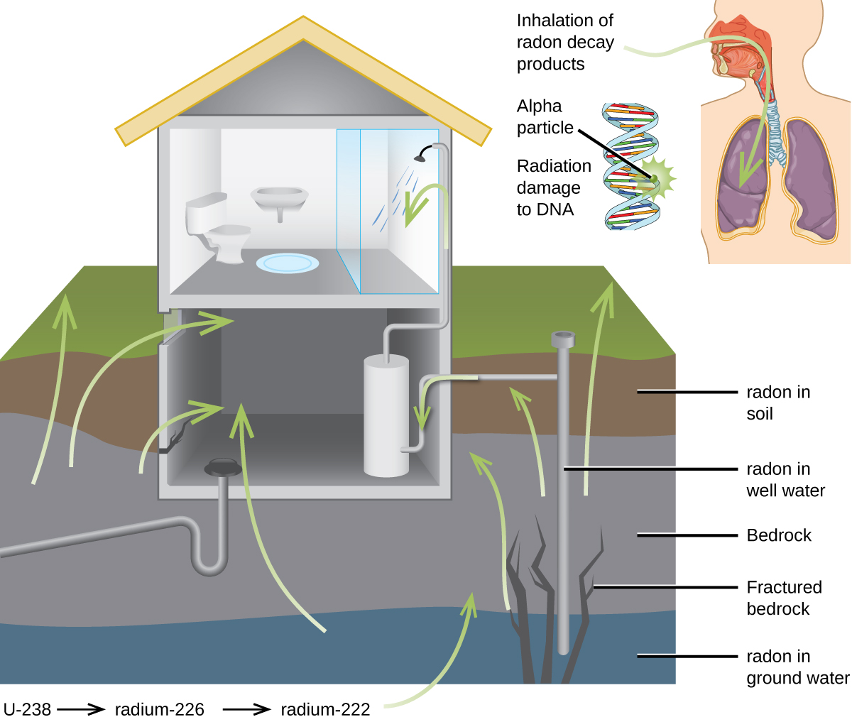 """A cut-away image of the side of a house and four layers of the ground it rests on is shown, as well as a second cut-away image of a person's head and chest cavity. The house is shown with a restroom on the second floor and a basement with a water heater as the first floor. Green arrows lead from the lowest ground layer, labeled """"radon in ground water,"""" from the third ground layer, labeled """"Bedrock"""" and """"Fractured bedrock,"""" from the second layer, labeled """"radon in well water,"""" and from the top layer, labeled """"radon in soil to the inside of the basement area. In the smaller image of the torso, a green arrow is shown to enter the person's nasal passage and travel to the lungs. This is labeled """"Inhalation of radon decay products."""" A small coiled, helical structure next to the torso is labeled """"alpha particle"""" on one section where it has a starburst pattern and """"Radiation damage to D N A"""" on another segment."""