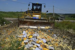 Cheese being bulldozed in a field